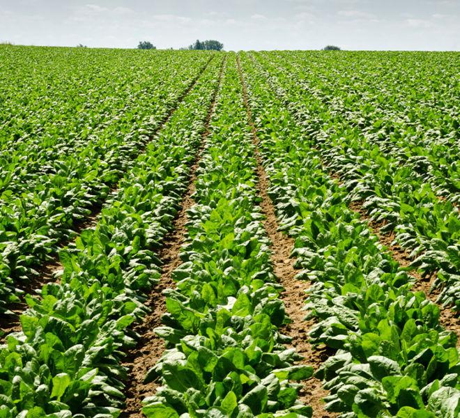 CropChaser-benefits-beets